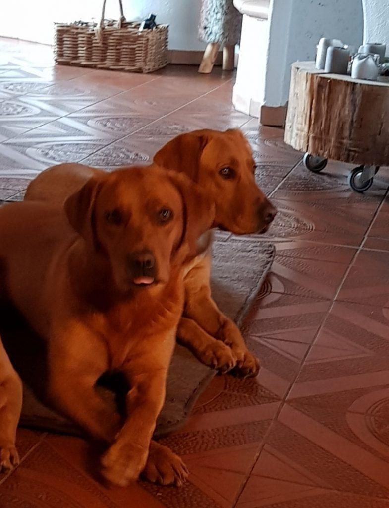 Kuna mit Tochter Alma